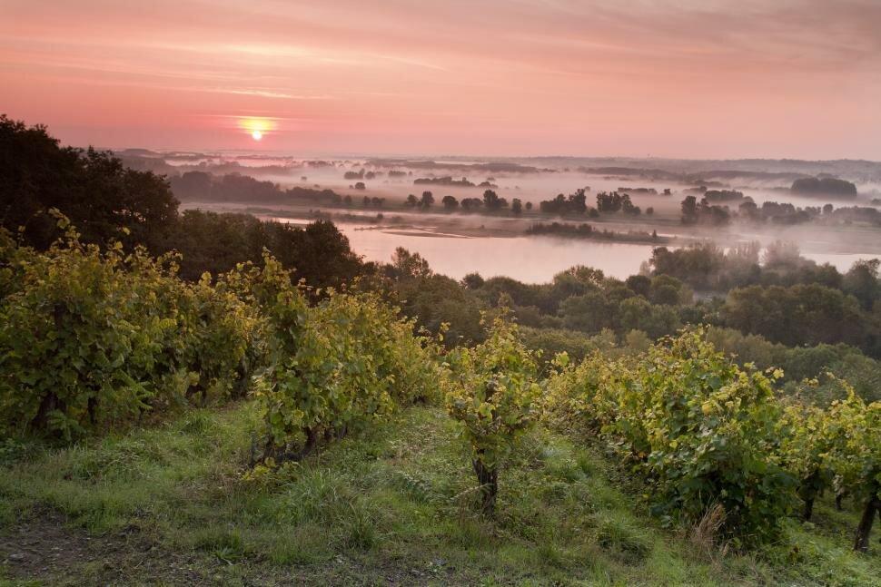Routes des vins du Val de Loire